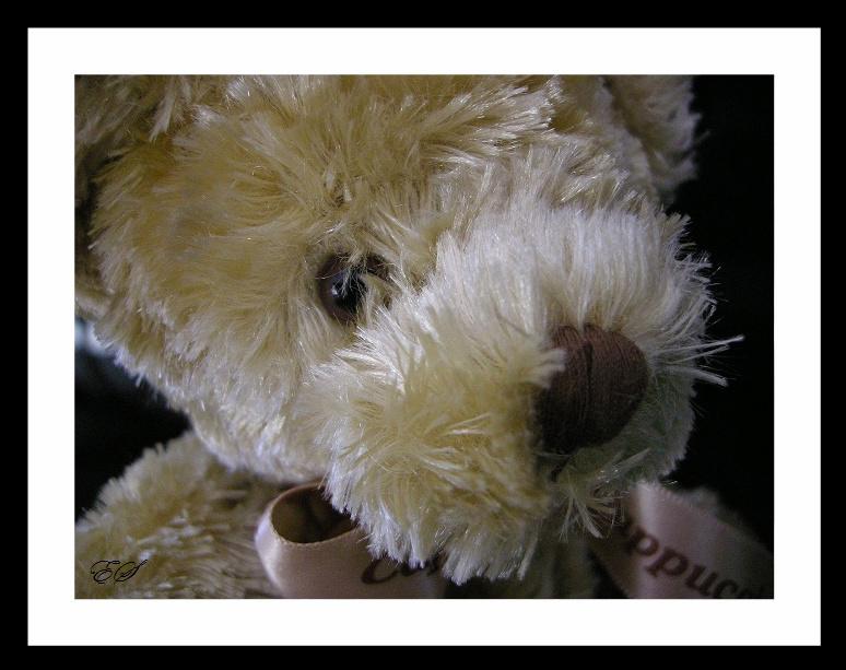 Cappuccino teddy 3