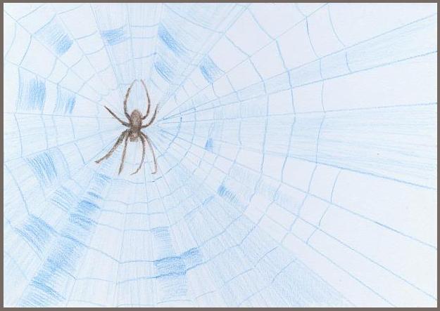 Světle modrá pavučina