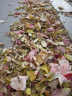 Listí šustí