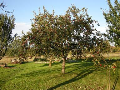 Jablůňka