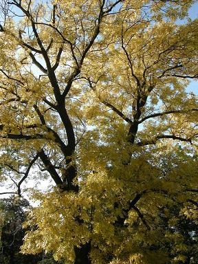 Krásně žlutej strom